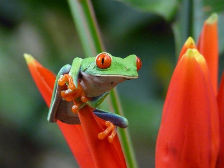 Afgelopen periode ben ik een paar weken naar Costa Rica geweest om een rondreis te maken. Één van de reizen die al lang op het verlanglijstje stond, maar er nu […]